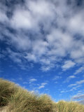 Dunes and Grasses  Mellon Udrigle  Wester Ross  Highland Region  Scotland  United Kingdom