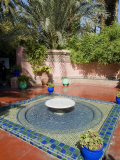 Jardin Majorelle  Marrakech  Morocco  North Africa  Africa