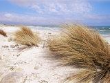 Bales Beach  Seal Bay Con Park  Kangaroo Island  South Australia  Australia