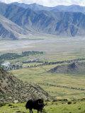 Yak, Ganden Monastery, Near Lhasa, Tibet, China Papier Photo par Ethel Davies