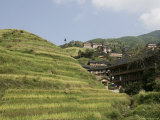 Longsheng Terraced Ricefields  Guilin  Guangxi Province  China