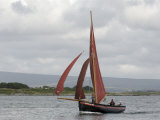 Galway Hookers at Roundstone Regatta  Connemara  County Galway  Connacht  Republic of Ireland