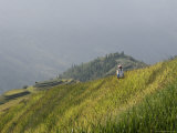 Woman of Yao Tribe in Ricefields  Longsheng Terraced Ricefields  Guilin  Guangxi Province  China