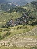 Longsheng Terraced Ricefields  Guilin  Guangxi Province  China