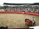Bull Fighting  Tena  Ecuador  South America