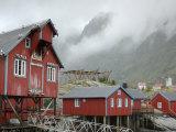 Seagulls Nesting on a Warehouse  Moskenesoya  Lofoten Islands  Norway  Scandinavia