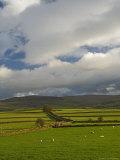 Dry Stone Walls Below the Pennines  Eden Valley  Cumbria  England  United Kingdom