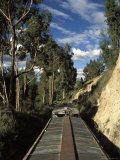 View of Trees from the Roof of the Train from Alausi to Riobamba  Ecuador  South America