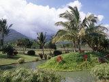 Tropical Plantation Garden  Maui  Hawaii  Hawaiian Islands  USA