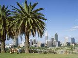 Palm Trees and City Skyline  Perth  Western Australia  Australia