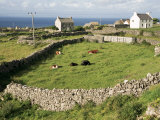 Walled Fields  Inishmore  Aran Islands  County Galway  Connacht  Eire (Republic of Ireland)
