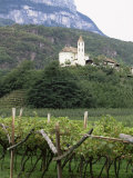 Church and Vines at Missiano  Caldero Wine District  Bolzano  Alto Adige  Italy
