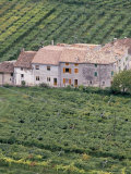 Vineyards Near Fumane in the Centre of the Valpolicella Classico Zone  Fumane  Veneto  Italy