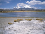Volcan Parinacota on Right  Volcan Pomerape on Left  Volcanoes in the Lauca National Park  Chile