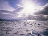 Pack Ice with Dominican Gulls  Antarctica  Polar Regions