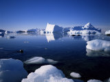 Ice Scenery and Seal  Antarctica  Polar Regions
