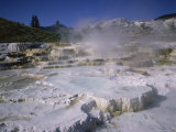 Opal Terrace  Mammoth Hot Springs  Yellowstone National Park  Wyoming