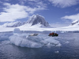 Tourists in Rigid Inflatable Boat Approach a Seal Lying on the Ice  Antarctica