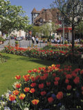 Flower Beds with Tulips in Town Centre  Deauville  Calvados  Normandy  France