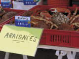 Crabs for Sale  Barneville Carteret  Cotentin Peninsula  Manche  Normandy  France