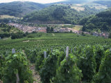 Beaujolais Vineyards  Beaujeau Village  Rhone Valley  France