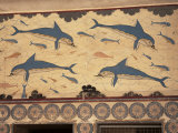Dolphins  Knossos  Crete  Greek Islands  Greece