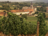 Maconnais Vineyards  Poilly Fuisse  Ozenay  Near Macon  Saone-Et-Loire  Burgundy  France