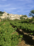 Vines in Vineyard  Village of Bonnieux  the Luberon  Vaucluse  Provence  France
