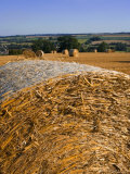 Hay Bales  Seen from the Cotswolds Way Footpath  the Cotswolds  Gloucestershire  England