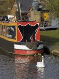Swan and Narrowboat Near the British Waterways Board Workshops  Tardebigge  England