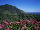 Landscape Near Sao Roque Do Faial  Island of Madeira  Portugal  Atlantic