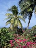 Andromeda Gardens  Near Bathsheba  Barbados  West Indies  Caribbean  Central America