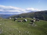 Landscape in Aurlandsdalen  Sogn Og Fjordane  Norway  Scandinavia