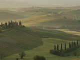 Morning View Across Val d&#39;Orcia to the Belvedere  Near San Quirico d&#39;Orcia  Tuscany  Italy