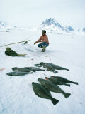 Inuit Man Fishing for Halibut  Greenland  Polar Regions