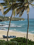 Sam Lords Castle  Palms and Beach  Barbados  West Indies  Caribbean  Central America