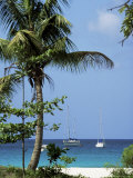 Yachts and Palms  Barbados  West Indies  Caribbean  Central America