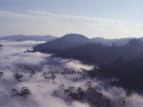 Dawn Mists Clearing Over Virgin Dipterocarp Rainforest  Danum Valley  Island of Borneo