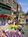 Sunday Flower Market  Columbia Road  London  England  United Kingdom