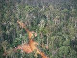 Logging Road Through Rainforest  Brazil  South America