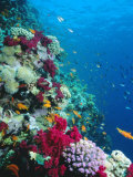Huge Biodiversity in Living Coral Reef  Red Sea  Egypt