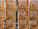 Caged Birds for Sale  Yuen Po Street Bird Garden  Mong Kok  Kowloon  Hong Kong  China