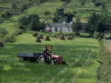 Croft with Hay Cocks and Tractor  Glengesh  County Donegal  Eire (Republic of Ireland)