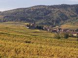 Vineyards  Hunawihr  Alsace  France
