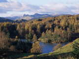 Tarn Hows  Lake District National Park  Cumbria  England  United Kingdom