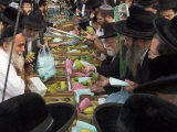 Crowd of Orthodox Jews Buying the Etrog for the Lulav  Four Types Market  During Sukot  Israel