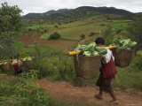 Two Men Carrying Heavy Loads on the Way to Local Market  Shabin Area  Shan State  Myanmar (Burma)