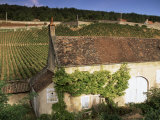 Old House and Vineyards  Bourgogne (Burgundy)  France