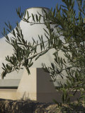 Close up of the Shrine of the Book  with Olive Tree Branches  Israel Museum  Jerusalem  Israel