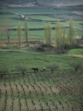 Man Ploughing with Mule Near Puente La Reina  Navarra  Northern Area  Spain